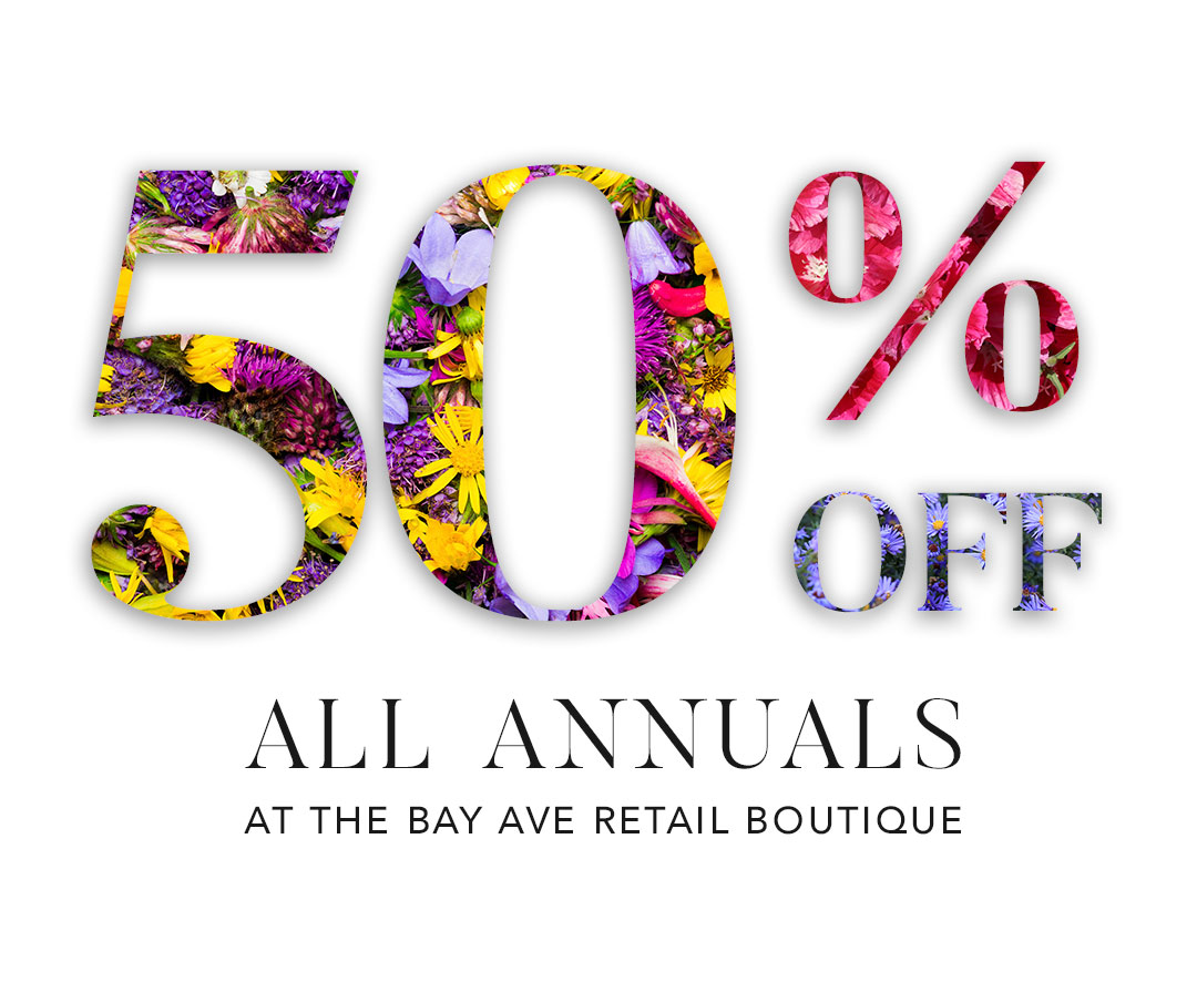 50% Off All Annuals at the Bay Ave retail boutique in Surf City